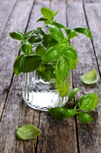 Fresh basil with water drops in a glass container